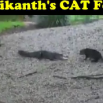 Rajnikanth's Cat Found   Funny Video for Whatsapp Share