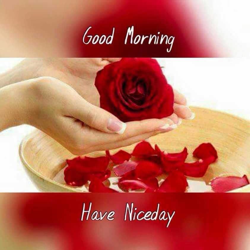 Gud morning have a nice day