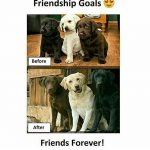 Friendship Goals – Best Friendship Pic for Friends