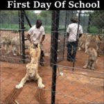 First Day Of School – Funny Lion Photo