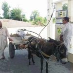 CNG Gas Driven Funny Donkey – Indian People Funny Photo