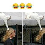 Funny Photo for Facebook Download